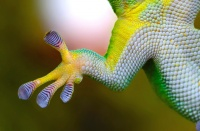 gecko-800887_1920_small